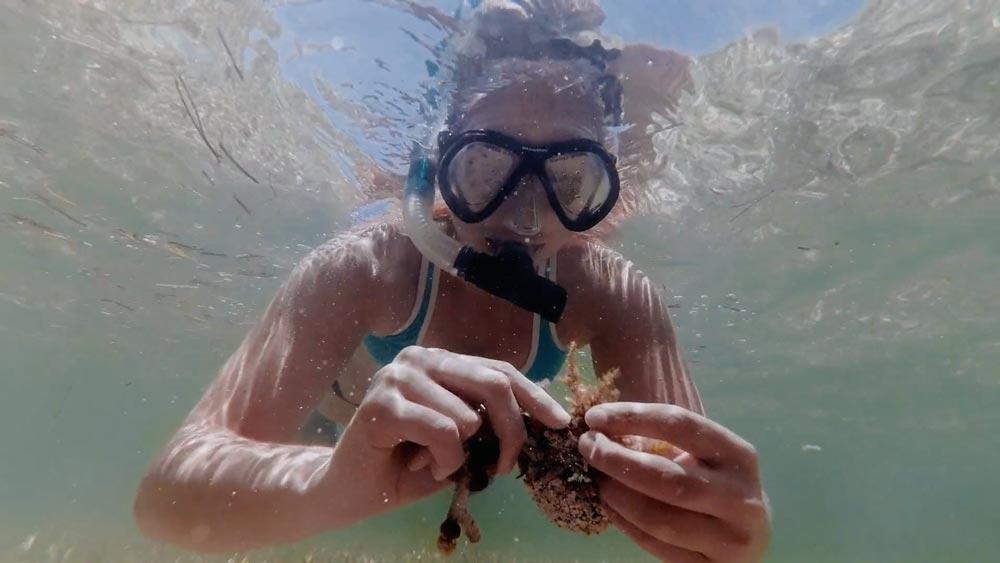 RBFF   Documentary   Deep Dive